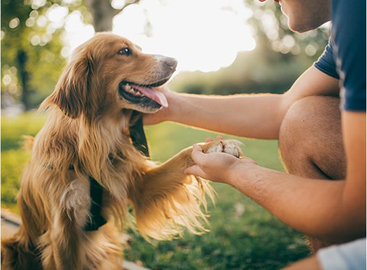 Canton Animal Hospital gives your pet the attention it deserves