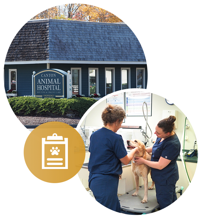 Canton Animal Hospital caring for dog