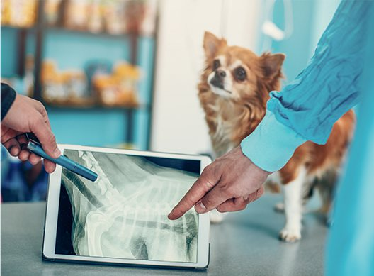 Canton Animal Hospital looking over pet x-rays